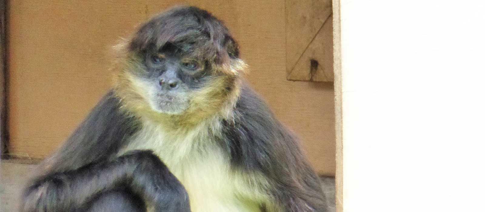 Die fotogenen Affen im Naples Zoo