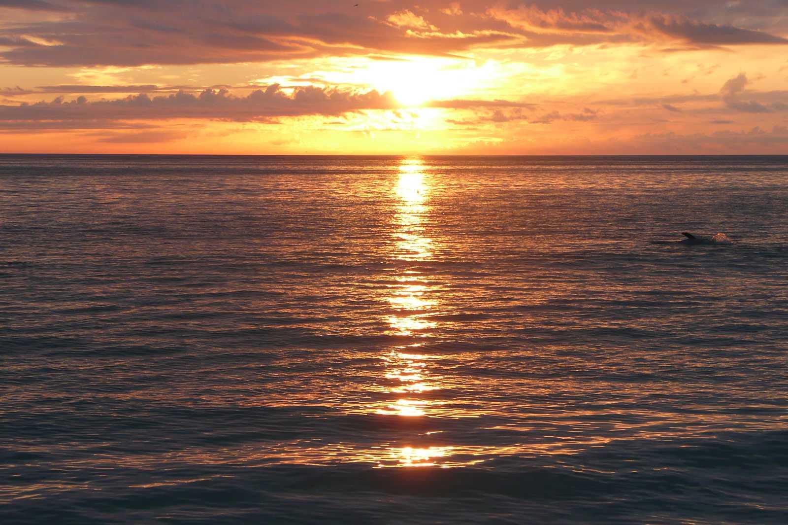 Ein Delfin im Sonnenuntergang