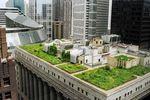 Grünes Dach der Cityhall