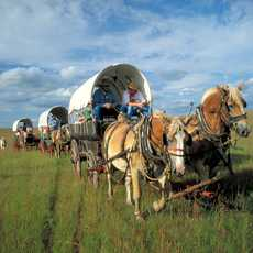 Chuckwagons in El Dorado