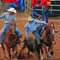 Cowboys beim Rodeo