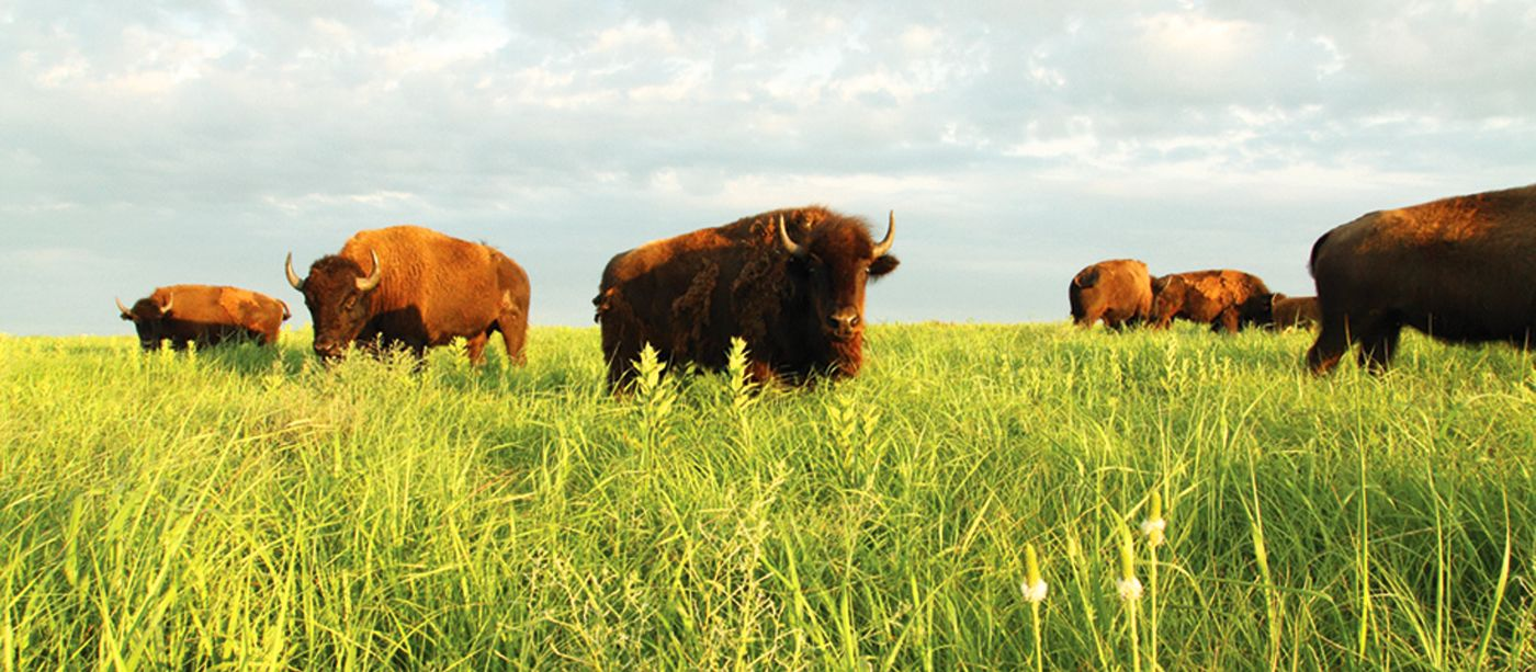 Tallgrass National Preserve, Strong City, Kansas
