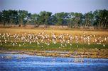 Vögel am Quivira-Fluss in den Kansas Wetlands