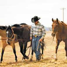 Cowboy mit Pferden in Texas