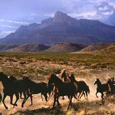 Cowboy und Pferde auf der Dude Ranch in Texas