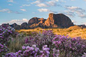 Blühender Wüsten-Beifuß vor den Chisos Mountains