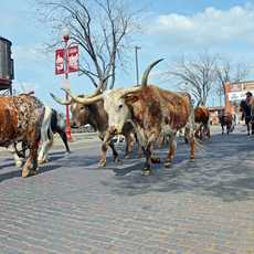 Im Fort Worth Stockyards National Historic District