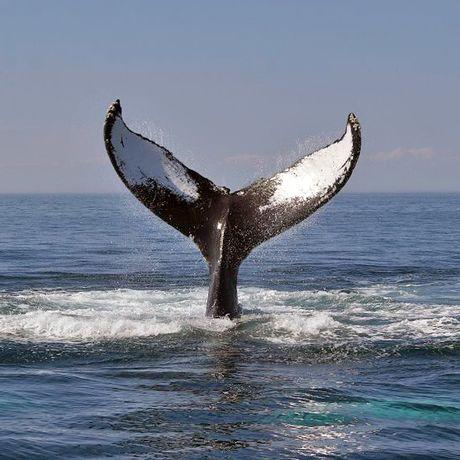 Impression Boston Whale Watch