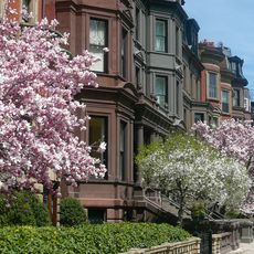 Commonwealth Avenue im FrŸhling