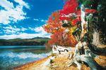 Schöne Herbstbäume am See von New Hampshire in den Neuenglandstaaten der USA