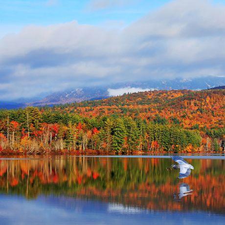 Wald in herbstlichen Farben spiegelt sich im See, White Mountains, New Hampshire