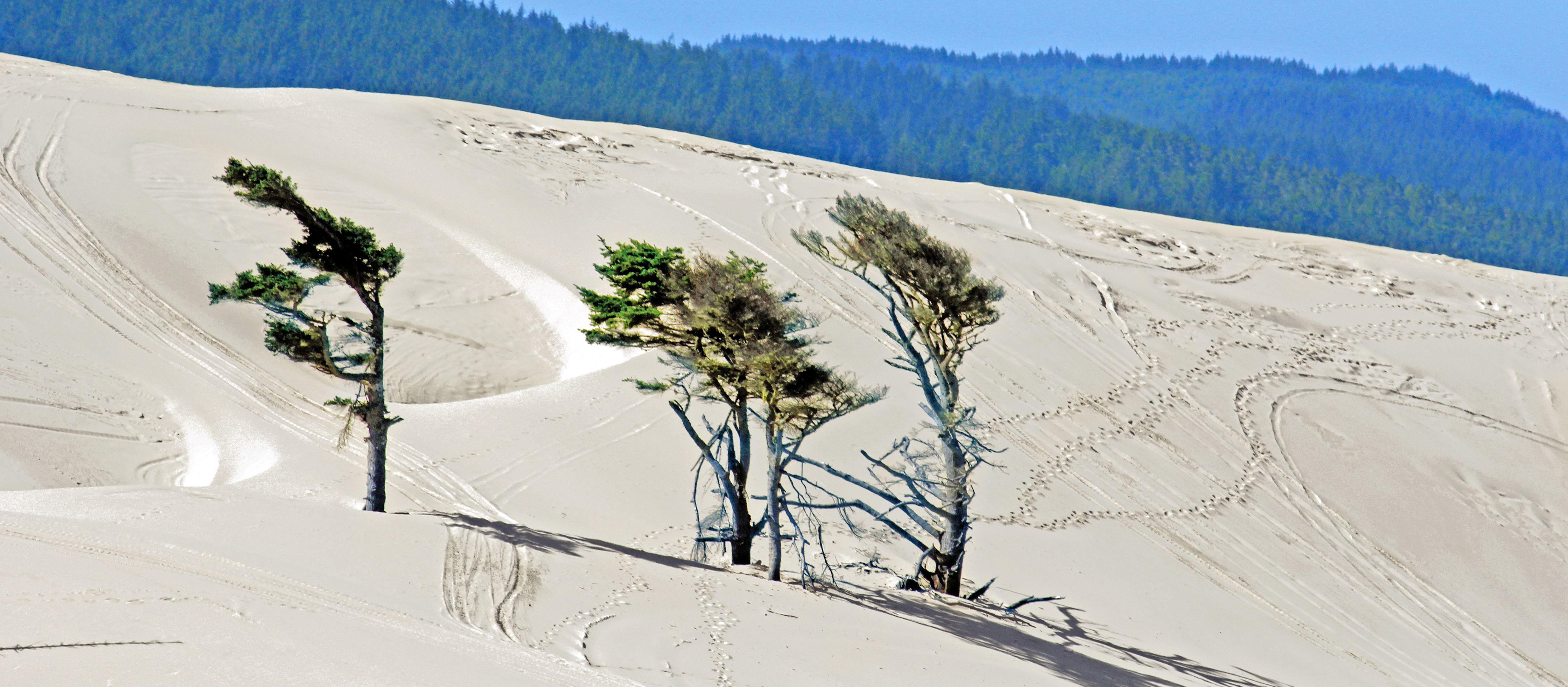 Sandduenen bei Florence in Oregon