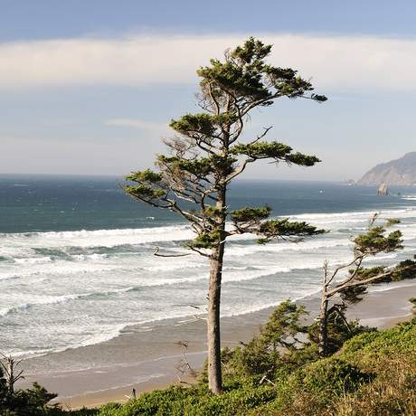 Coastline,Cannon Beach,Oregon Coast,Pacific Ocean,Oregon,USA