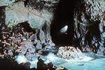 Sea Lion Cave in Oregon im Nordwesten der USA