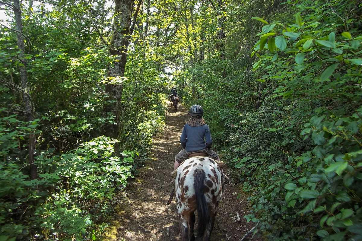 Ausritt in einem Waldabschnitt von Florence im US-Bundesstaat Oregon