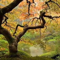 Teich Japanischer Garten in Portland, Oregon