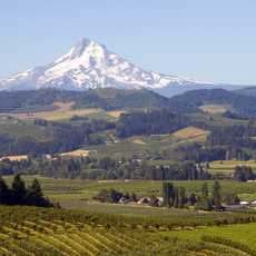 Mount Hood Landscape, Oregon