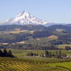 Mount Hood Landscape, Oregon