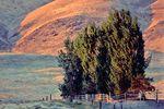 Der Weinberg in der Nähe von Benton City in Washington im Nordwesten der USA