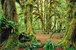 Der Olympic Nationalpark in Washington in Nordwesten der USA