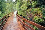 Der Boardwalk Olympic Nationalpark in Washington im Nordwesten der USA