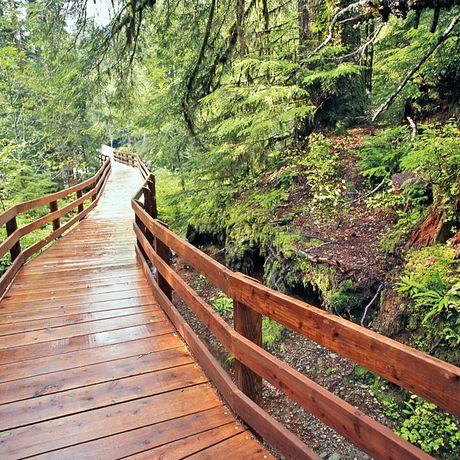 Boardwalk durch den Regenwald