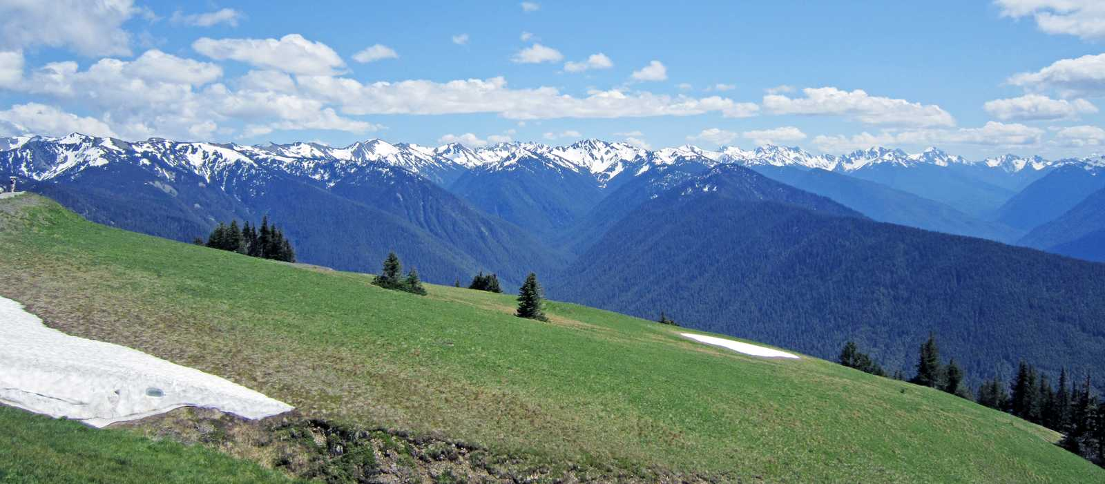 Hurricane Ridge im Olympic National Park