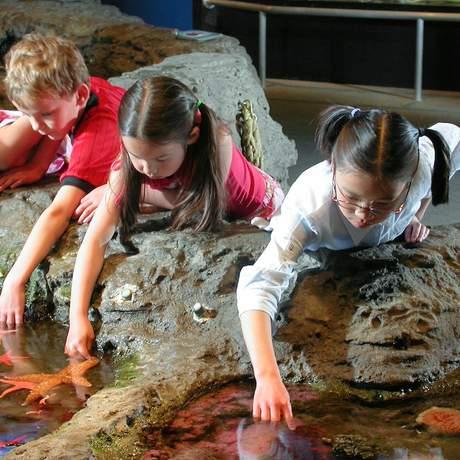 Kinder im Seattle Aquarium