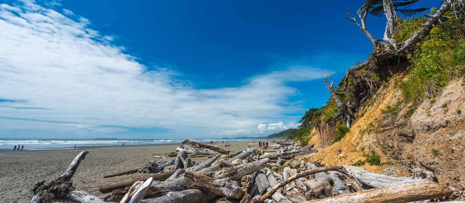 Blick auf den Kalaloch Beach im Olympic National Park in Washington