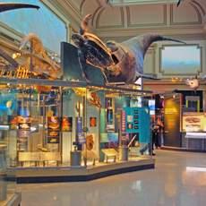Sant Ocean Hall im Natural History Museum