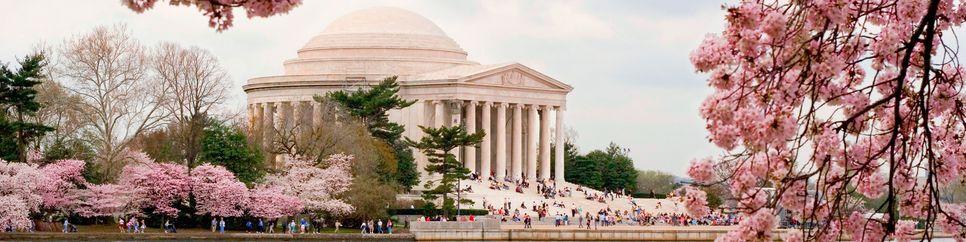 Capitol zur Kirschblüte