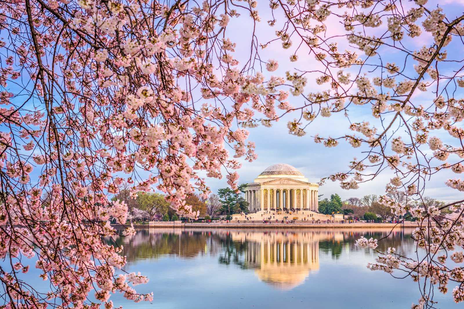 Jefferson Memorial in Washington DC zur Kirschblüte