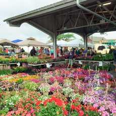 Ein Stand mit Pflanzen auf dem Public Market in Rochester