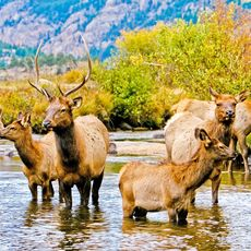 Wildlife im Rocky Mountain National Park