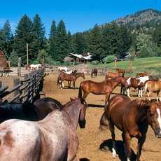 Pferderanch in Montana