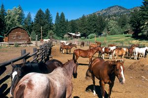 Ranchurlaub in Montana: Pferde vor Ranch