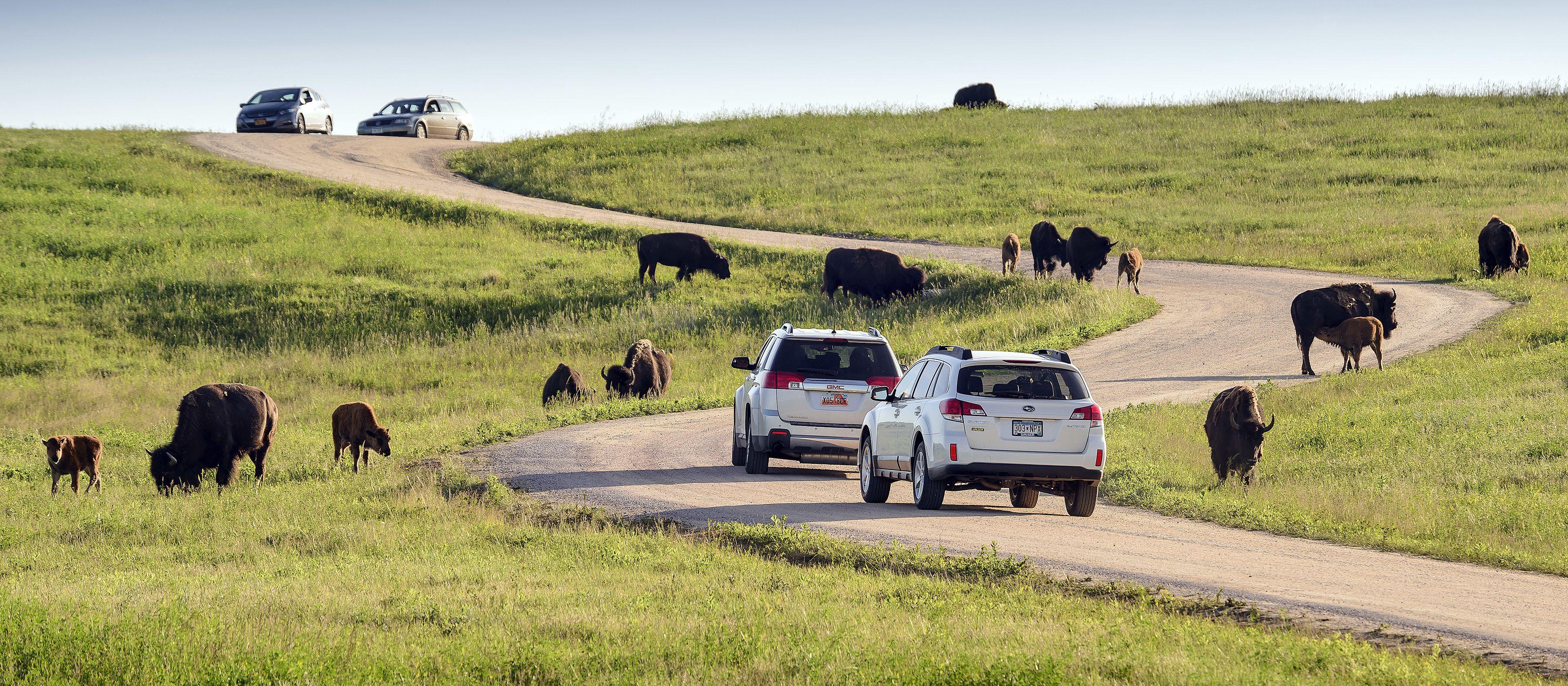 Imperssionen des Custer State Park in Custer, South Dakota