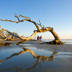 Treibholz am Strand von Jekyll Island in Georgia