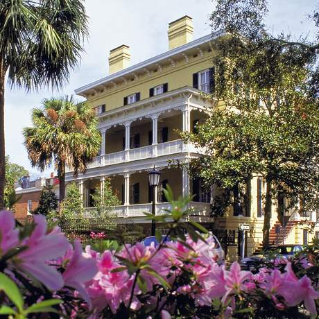 Impression Savannah