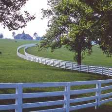 Pferde auf einem Feld