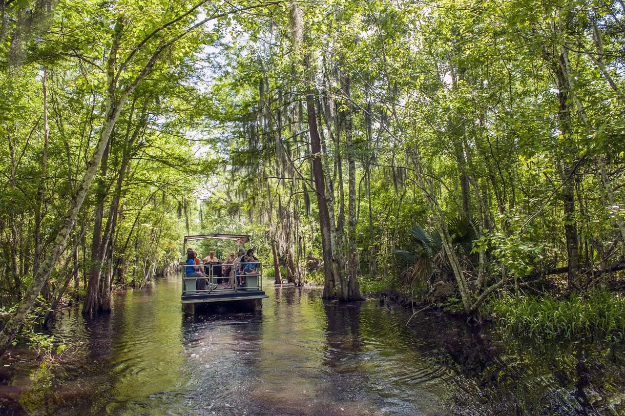 Swamp Tour Scenic