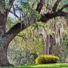 Park der Longwood Plantation