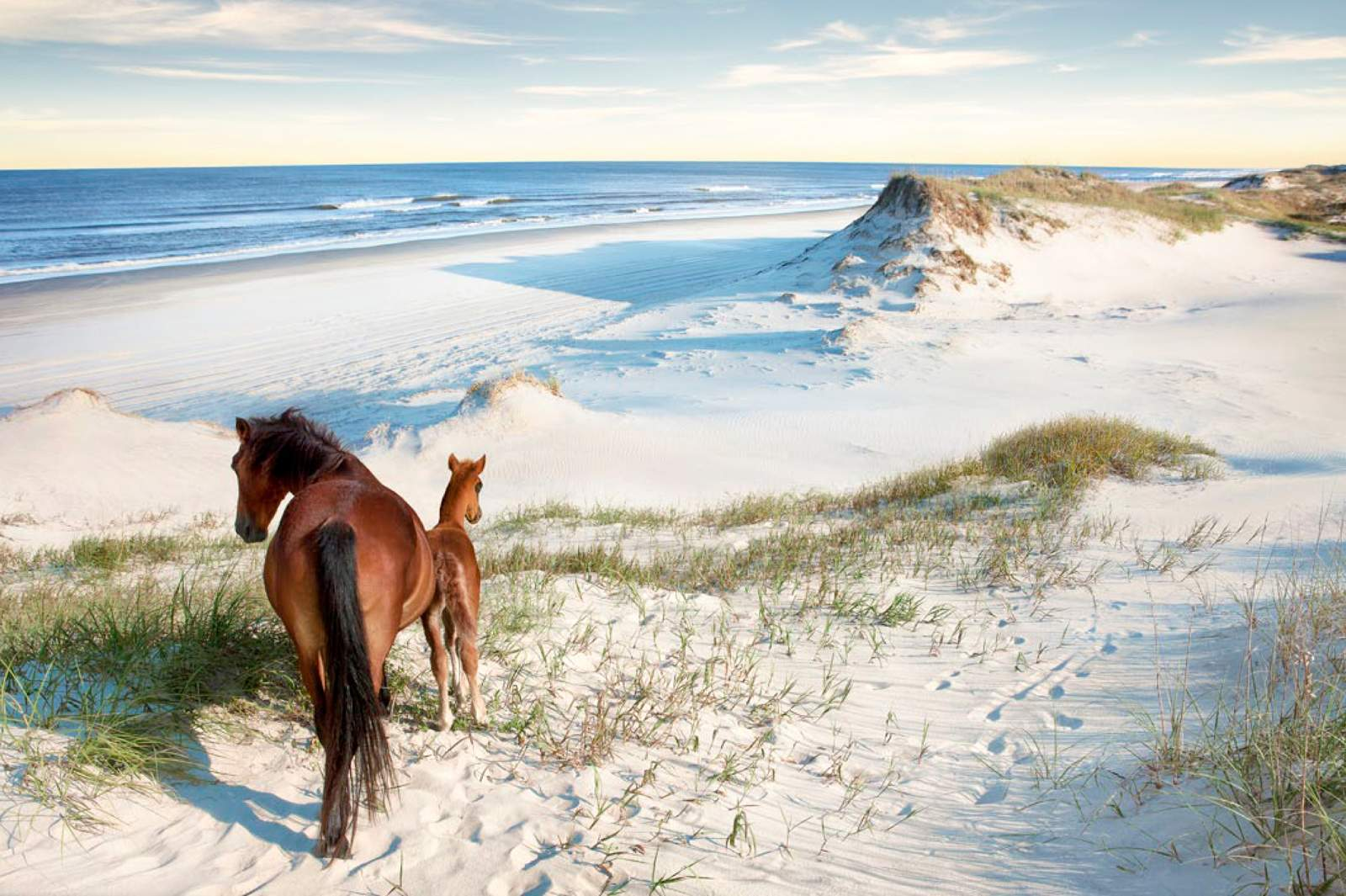 Best Hotels In North Carolina Outer Banks