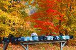 Briefkästen im Herbst in North Carolina