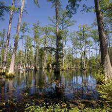 Die Cypress Gardens in South Carolina