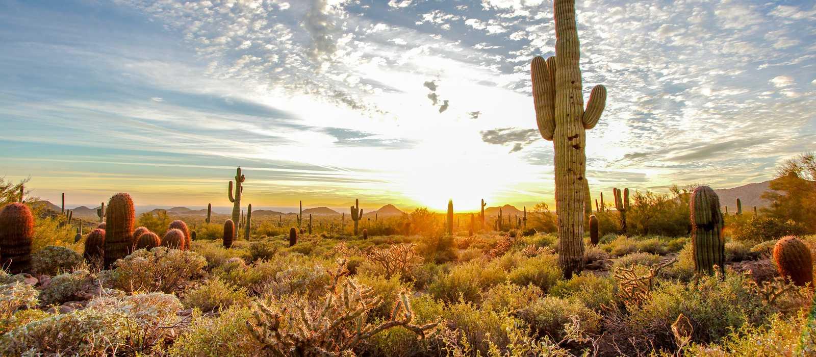 Die Sonora Wüste im Usery Mountain Regional Park in Mesa