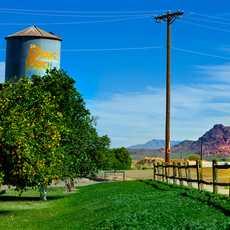 Orange Patch in Mesa, Arizona