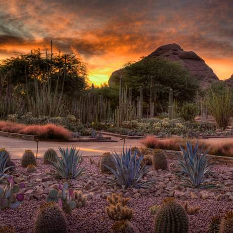 Desert Botanical Garden Ottosen Entry Garden at Sunset in Phoenix, Arizona