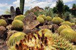 Die vielfältige Pflanzenwelt des Saguaro National Parks in Arizona
