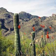 Berglandscahft, in Tucson, Arizona